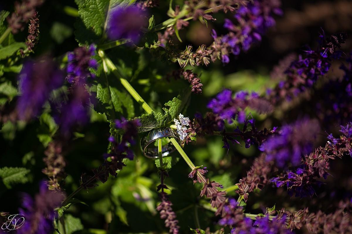 beautiful photo of wedding rings in flowers