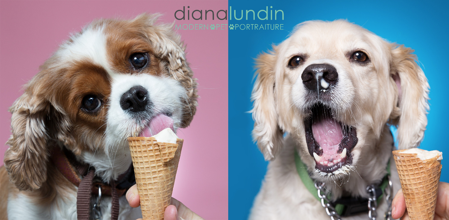 Photo of two dogs eating ice cream cones.