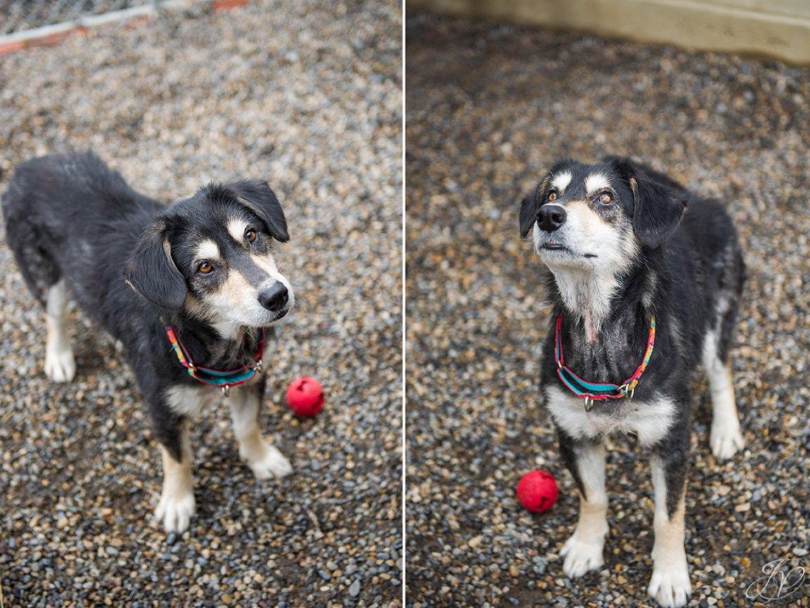 rescued dog photo, regional animal shelter, dog rescue photo, canine skin disease photo