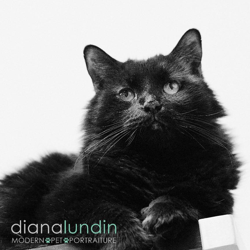 photo of a black cat