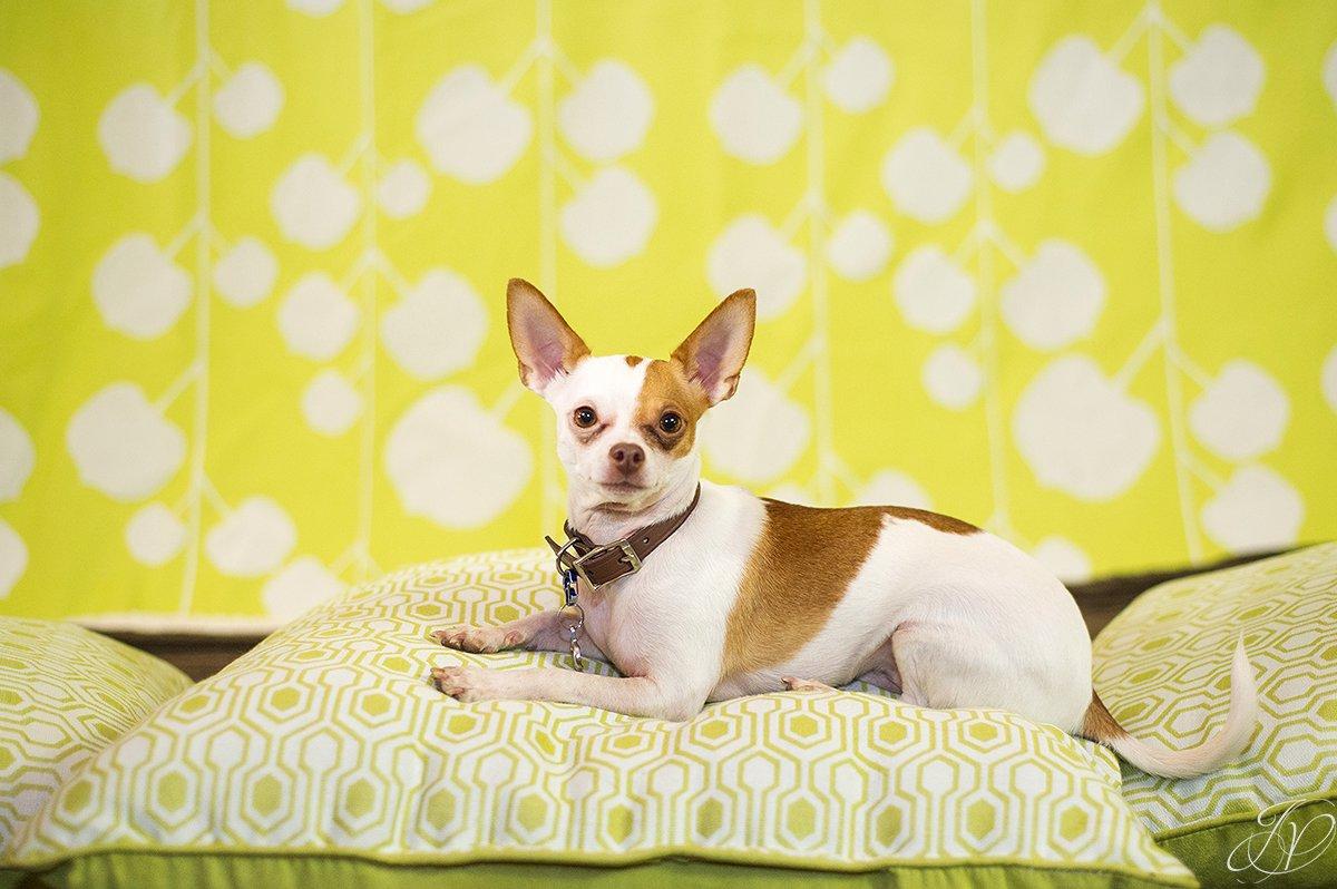 dog portrait fundraiser, fundraiser for dog shelter, regional animal shelter