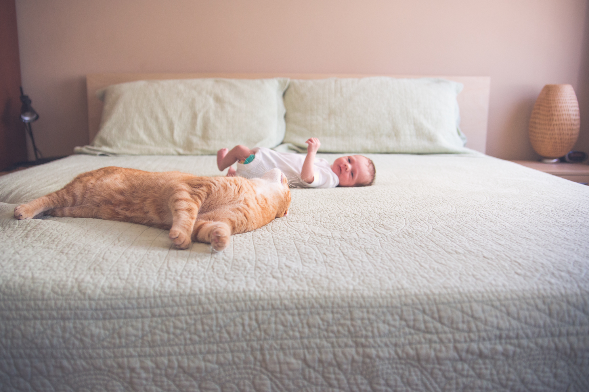 ginger cat on bed with newborn girl